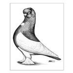 Ancient Shortface Pigeon Small Poster