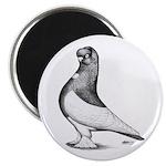 Ancient Shortface Pigeon Magnet