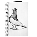 Ancient Shortface Pigeon Journal