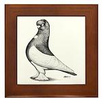 Ancient Shortface Pigeon Framed Tile