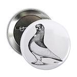 Ancient Shortface Pigeon 2.25