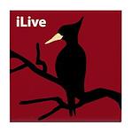 Ivory-billed Woodpecker: iLive Tile Coaster