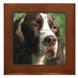 Adoring English Springer Span Framed Tile