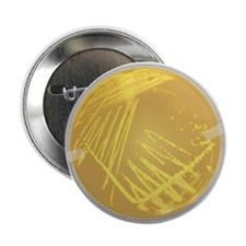 "The 2.25"" Streak Plate Button (10 pack)"