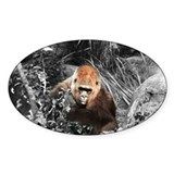 """Gorilla in the Mist"" Oval Decal"