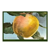 Heirloom Pearmain Apple Postcards (Package of 8)