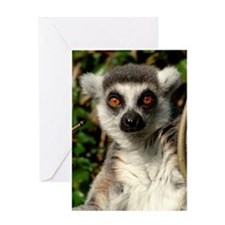 Ringtail Lemur Greetings Card