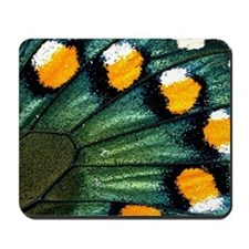 Battus Philenor Butterfly Mousepad