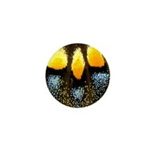 Papilio Polyxenes Butterfly Mini Button (100 pack)