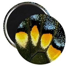Papilio Polyxenes Butterfly Magnet