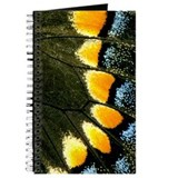 Papilio Polyxenes Butterfly Journal