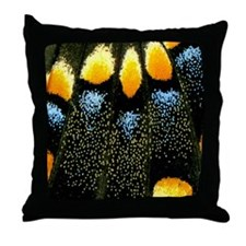 Papilio Polyxenes Butterfly Throw Pillow