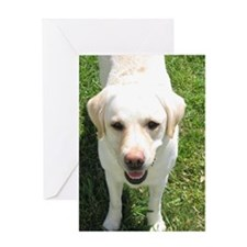 Smiling Yellow Lab Birthday Greeting Card