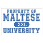 Maltese University Large Poster