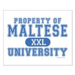 Maltese University Small Poster