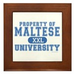 Maltese University Framed Tile