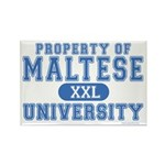 Maltese University Rectangle Magnet (100 pack)