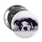 BOSTON TERRIER SWEET DOG Button