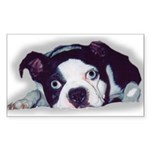 BOSTON TERRIER SWEET DOG Rectangle Sticker