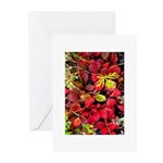 Autumn Greeting Cards (Pk of 20)