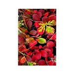 Autumn Rectangle Magnet (10 pack)