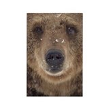 Bear Face Rectangle Magnet (10 pack)