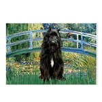 Bridge / Bouvier Postcards (Package of 8)