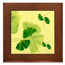 Ginkgo Biloba Leaves Framed Tile