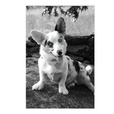 Blue Merle Cardigan Corgi Postcards (8 pack)