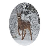 Whitetail Doe Oval Ornament
