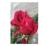 A001-RED ROSE Postcards (Package of 8)