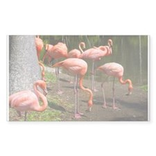 Flamingo Photo Art Rectangle Decal
