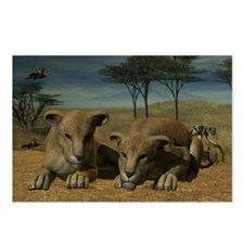 Lion Cubs Postcards (Package of 8)