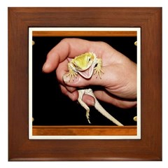 Horned Toad Framed Tile