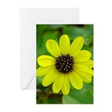 Daisy Photo Greeting Cards (Pk of 10)