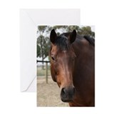 Unique Thoroughbred racing Greeting Card
