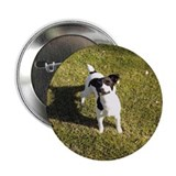 "Jack Russel Looking Up 2.25"" Button (100 pack)"