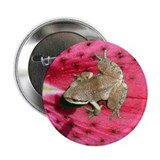 "Pacific Tree Frog 2.25"" Button"