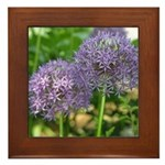 Allium Framed Tile