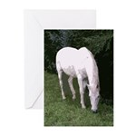 EPN Sanctuary Program Greeting Cards (Pk of 20)