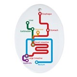 Gastrointestinal Subway Map Oval Ornament