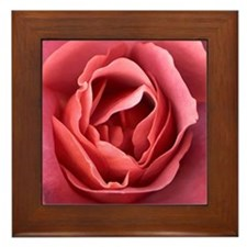 Red Rose 03 Framed Tile
