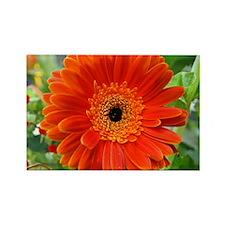 Orange Gerbera Daisy Rectangle Magnet