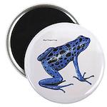 Blue Poison Frog 2.25