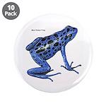 Blue Poison Frog 3.5