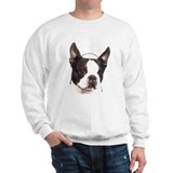 Boston Terrier Jumper