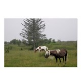 Grayson Highlands Wild Ponies Postcards