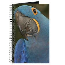 Hyacinth Macaw Journal