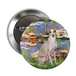 Lilies / Ital Greyhound 2.25