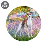 Garden / Ital Greyhound 3.5